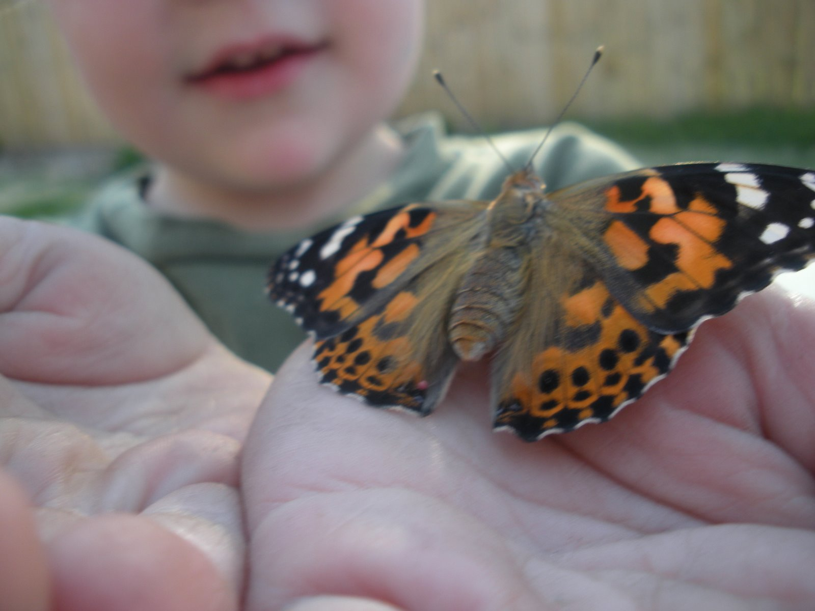 Butterfly Lady :: Low-Cost Caterpillars