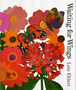 Waiting for Wings by Lois Ehlert