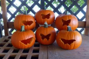 butterflies and pumpkins butterfly lady rh butterfly lady com butterfly pumpkin carving template butterfly pumpkin carving stencil