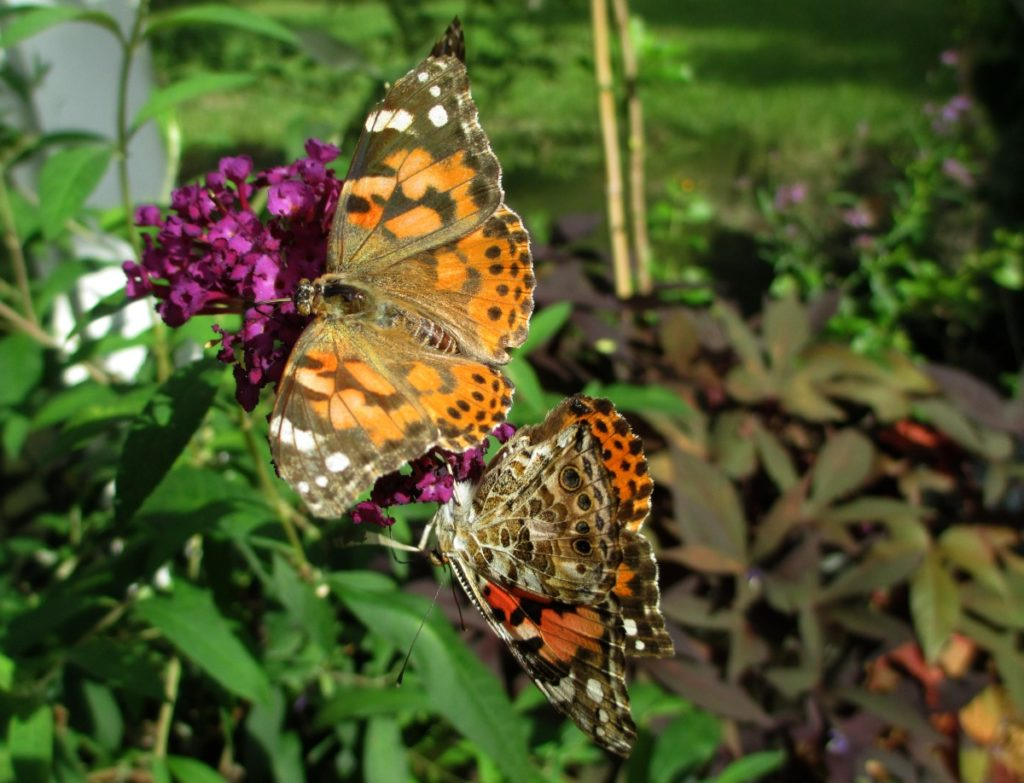 butterfly lady education gardening and fun spreading the joy
