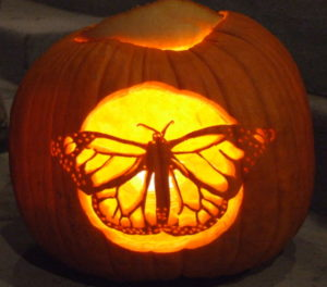 butterflies and pumpkins butterfly lady rh butterfly lady com